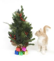 Free Yellow Kitten And Tree Stock Image - 3784691