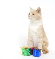 Free Yellow Kitten And Presents Stock Photos - 3784693
