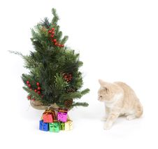 Free Yellow Kitten And Tree Stock Photos - 3784723