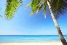Free Tropic Scene Stock Image - 3785801