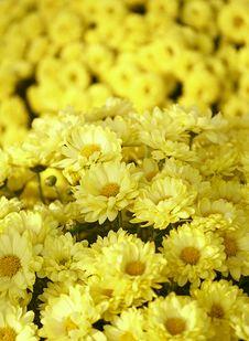 Free Flowers Stock Photos - 3787013