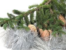 Branch Of A Christmas Tree Of With A Tinsel And St Royalty Free Stock Photos