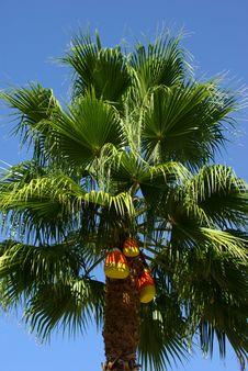 Candy Corn Palm Tree Royalty Free Stock Photography