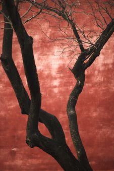 Free Dry Bole Royalty Free Stock Image - 3789236