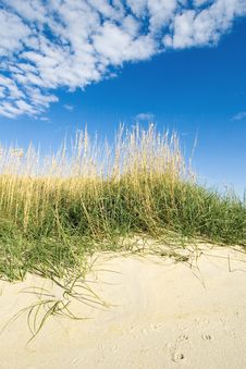 Free Sea Grass Stock Photos - 3789893