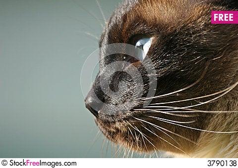 15 Hilarious In-Bread Cats - iHeartCats.com