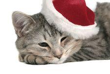 Free The Grey Cat Sleeps Stock Photography - 3790712