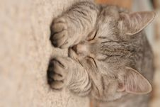 Free The Grey Cat Which Sleeps Royalty Free Stock Images - 3790729