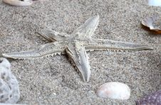 Free Starfish In A Beach Sand Stock Photography - 3791262