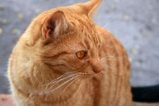 Free Cat Stock Images - 3791484
