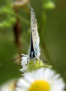Free Sad Butterfly Royalty Free Stock Photos - 3792048