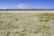 Free Sicilian Landscape Stock Images - 3792524