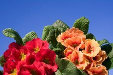 Free Spring Flowers Coming Up Stock Image - 3793151