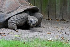 Free The Tortoise Stock Images - 3793924