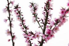 Free Flower Royalty Free Stock Image - 3794086