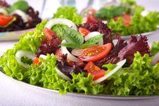 Free Fresh Salad With Onion Tomato And Basil Stock Image - 3794181