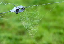 Free Close-up Of A Spiderweb Royalty Free Stock Photos - 3798168