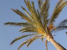 Free Palm Tree Royalty Free Stock Photos - 3799558
