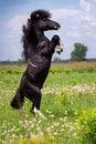 Free Pony Stock Images - 37937814