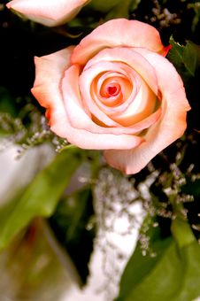 Pink Rose In Vase Stock Photos