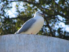Free Seagul Stock Images - 382844