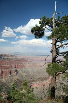 Free Grand Canyon Overlook Royalty Free Stock Photo - 387185