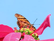 Free Butterfly 1 Stock Photography - 388172