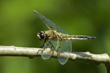 Free Dragonfly 2 Stock Image - 388301