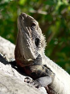 Free Lizard Stock Images - 389534