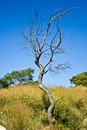 Free Lonesome Tree Royalty Free Stock Photography - 3808937