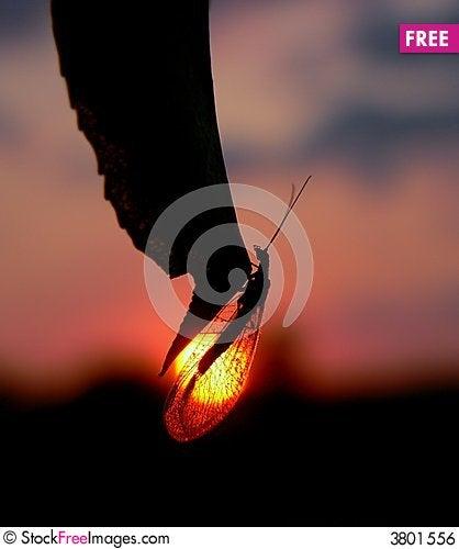 Free Twilight Shade Royalty Free Stock Image - 3801556