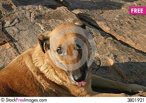 Free Dog Resting Stock Image - 3801921