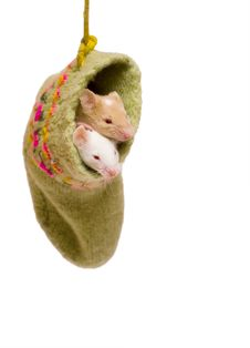 Free Mice In Sock Royalty Free Stock Photos - 3801598