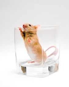 Free Mouse In Glass Stock Photography - 3801602