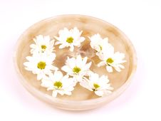 Daisies  In A Bowl Of Water Royalty Free Stock Photography