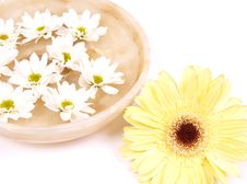 Daisies  In A Bowl Of Water Royalty Free Stock Images