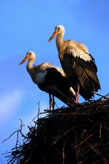 Free Two Storks Stock Photo - 3804600