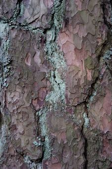Free Pine Bark Stock Photos - 3804763