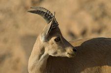 Free Goats Head Stock Photos - 3805913
