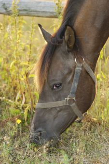 Free Head Of A Brown Horse Stock Photography - 3806212