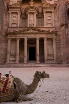 Camel In Front Of The Treasury Petra Jordan Stock Image