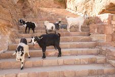 Free Mountain Goats On Stairs Petra Jordan Stock Photo - 3806700