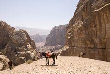 Donkeys With View Of Wadis Near Petra Jordan Royalty Free Stock Image