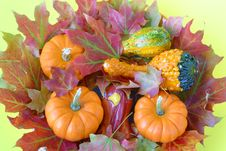 Free Autumn Maple Leaves & Gourds. Royalty Free Stock Images - 3807389