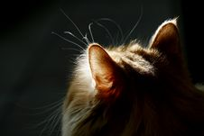 Free Cat And Sunshine... Royalty Free Stock Photography - 3807737