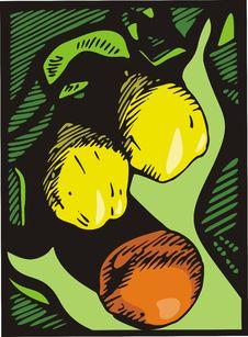 Free Fruit Illustration Series Royalty Free Stock Photo - 3808495