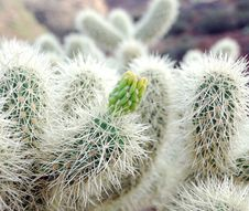 Free Close Up Of A Cactus Royalty Free Stock Images - 3808909