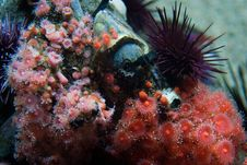 Free Seaplants Royalty Free Stock Photography - 3809447