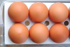 Free Many Egg In Refrigerator Royalty Free Stock Images - 3809759