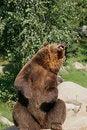 Free Bear Stock Photo - 3811170